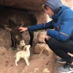 Asino e Cagnolino, Petra, Parco Archeologico, Valle Rocciosa, Hiking, Giordania