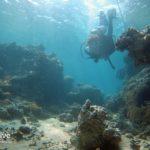 Sub, Immersione, Barriera Corallina, Mar Rosso, Golfo di Aqaba, Giordania